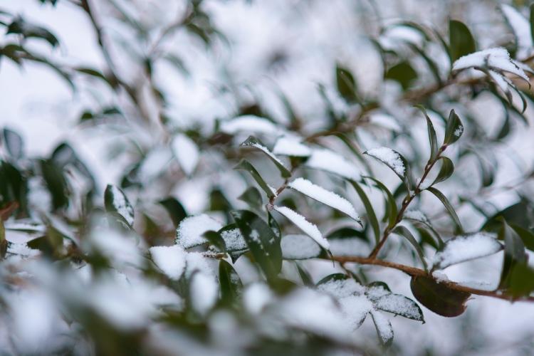 white-as-snow-2