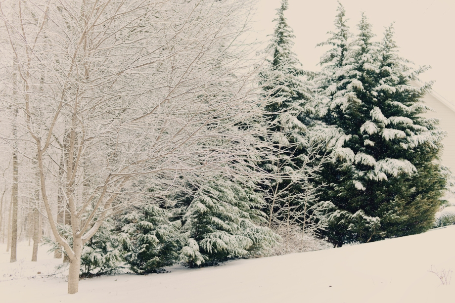 SnowDay2014-11