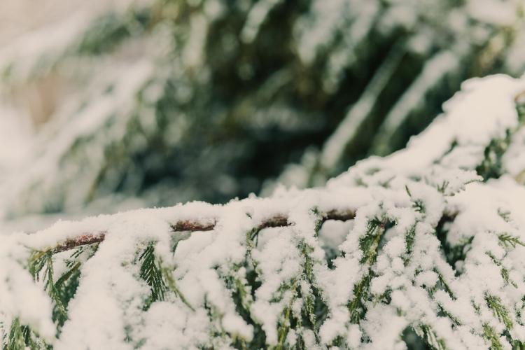 SnowDay2014-14