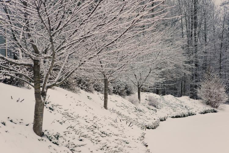 SnowDay2014-2