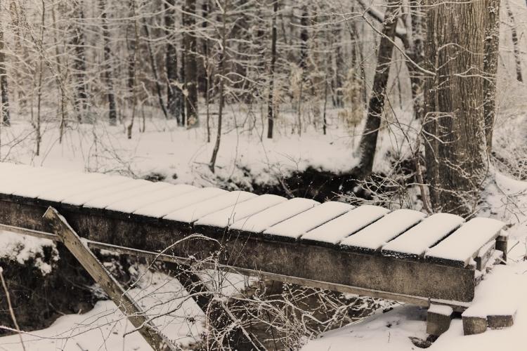 SnowDay2014-4