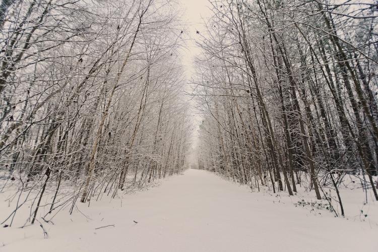 SnowDay2014-7