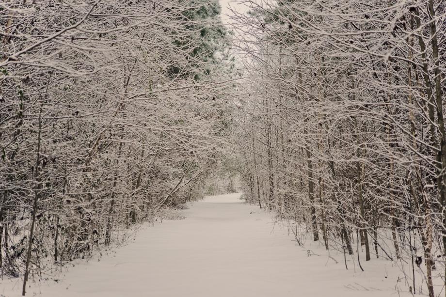 SnowDay2014-8